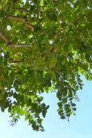 Tree at Epcot World Showcase