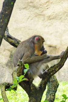 Monkey at Animal Kingdom