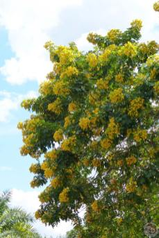 Magic Kingdom - Flowers, Plants + Trees