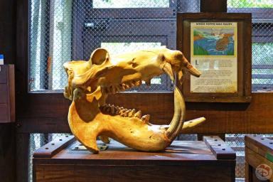 disneys-animal-kingdom-48