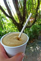 Disney's Animal Kingdom: Frozen Coca-Cola