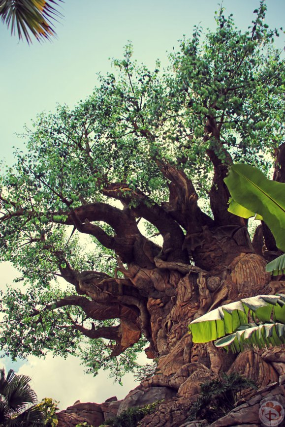 Day 19: Wilderness Explorers » Animal Kingdom / Breakfast at Tusker House / Dinner at Olive Garden