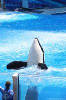 SeaWorld Orlando - One Ocean