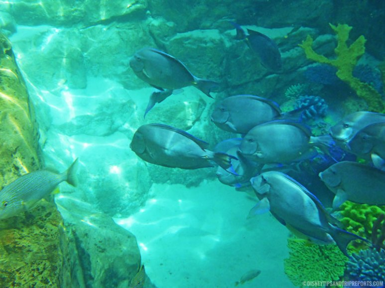 The Grand Reef at Discovery Cove