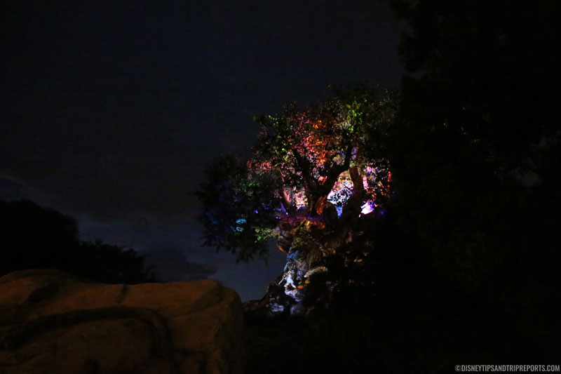 The Tree of Life Awakenings - Animal Kingdom