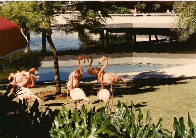 Flamingos- Johnny Kunzer (2)