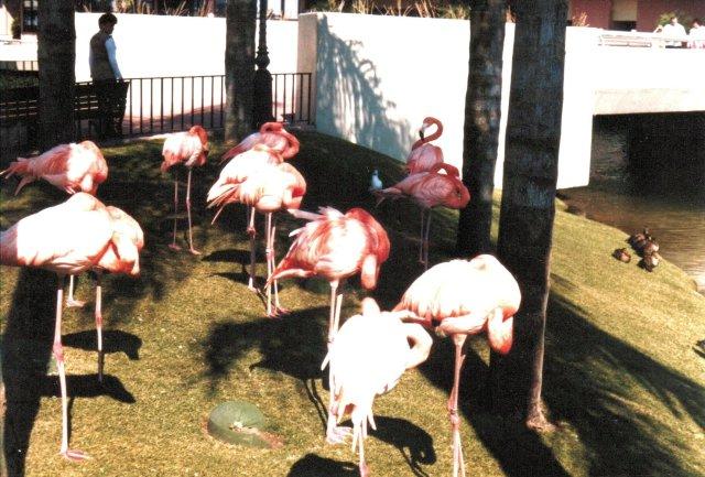 Flamingos in Epcot - Nora Martinez
