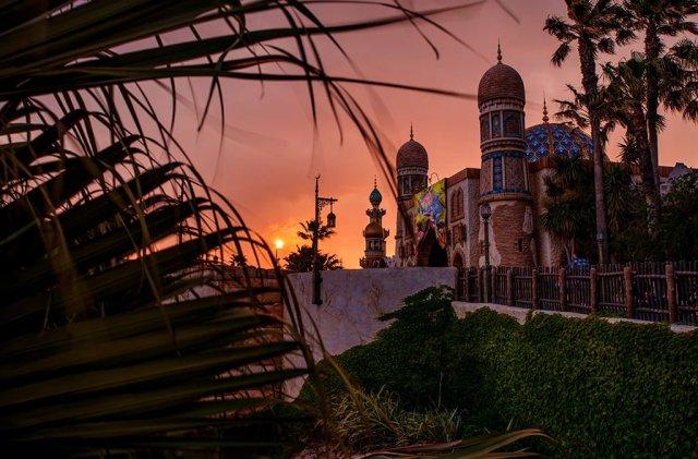 arabian-coast-sunset-plant