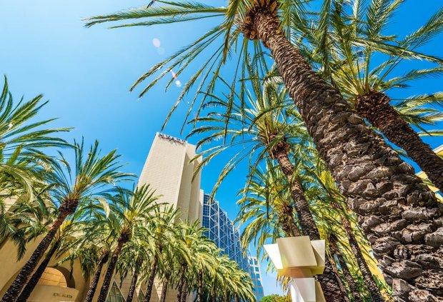 hyatt-regency-disneyland-hotel-palm-trees