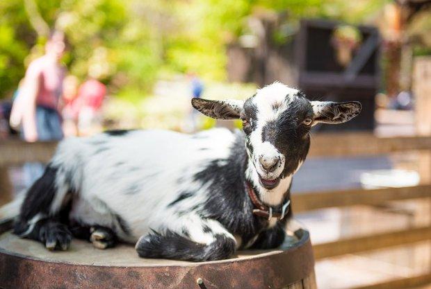 goat-galaxy-disneyland-bianca-486