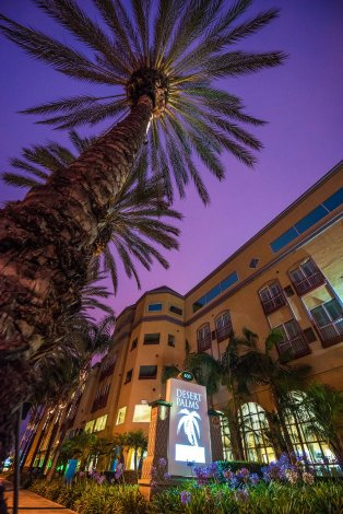 desert-palms-tall-tree-disneyland