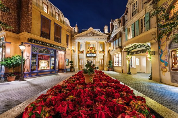 france-christmas-poinsettias-night copy
