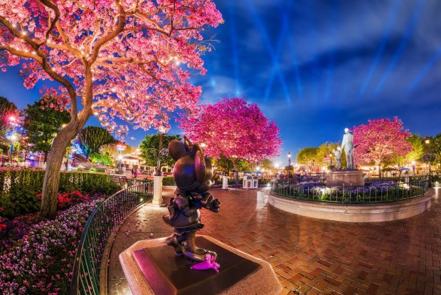 minnie-mouse-tabebuia-trees-blossoms-disneyland-night-bricker copy