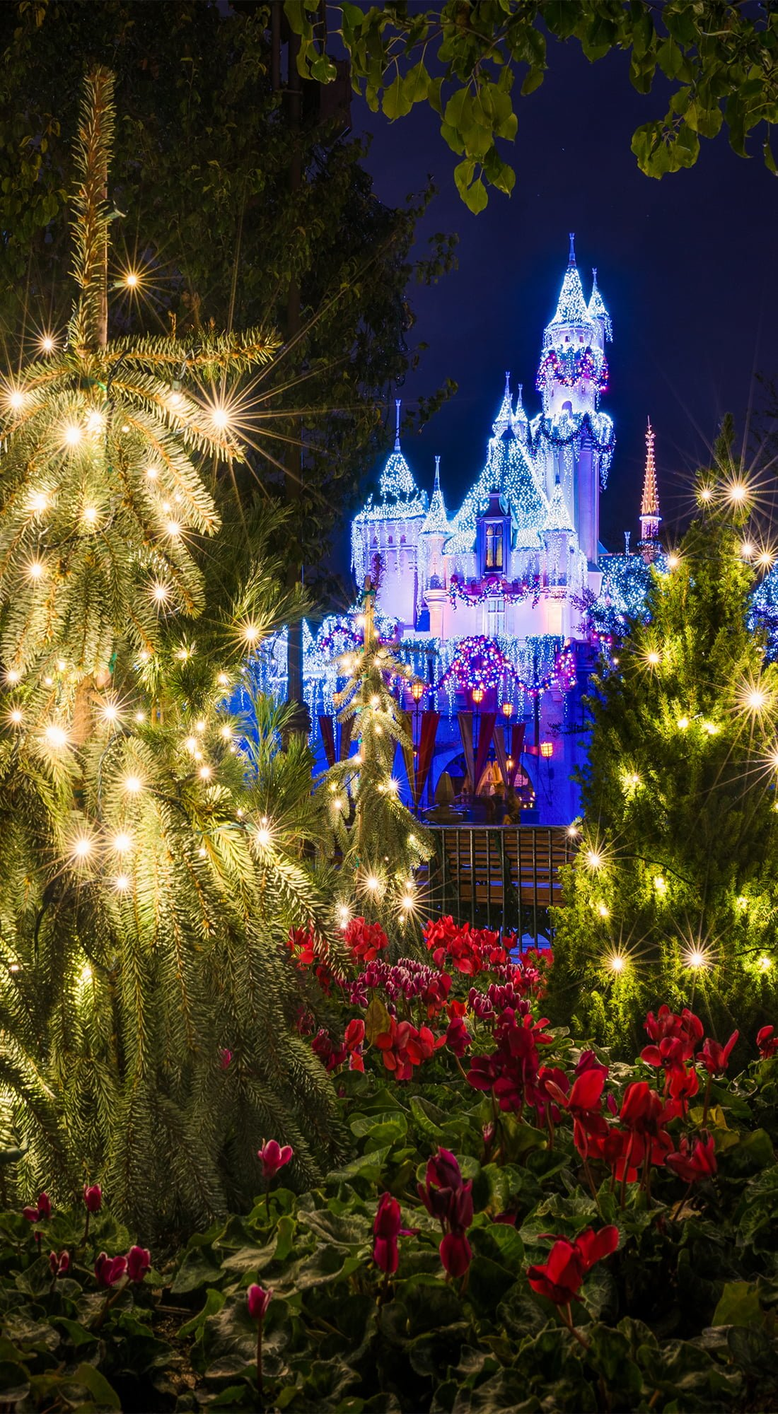Disneyland Christmas Trees Phone Wallpaper