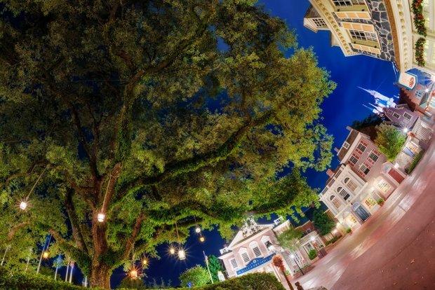 liberty-tree-upwards-night-fisheye-magic-kingdom