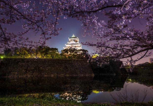 osaka-castle-cherry-blossoms-japan