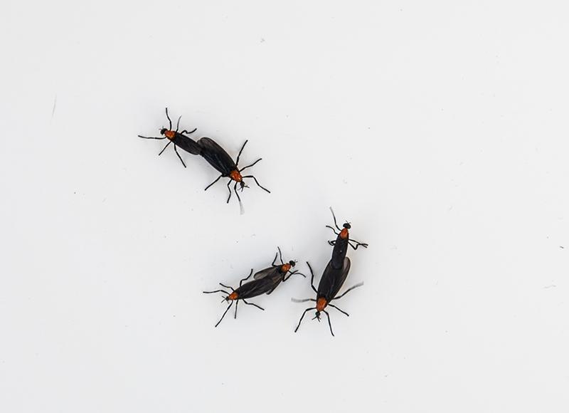 Love Bugs at Disney World - Disney Tourist Blog