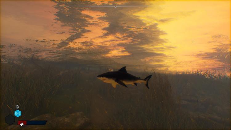 Maneater Requin sang promenade