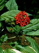 photo_article_plantes-défenses-immunitaires_8