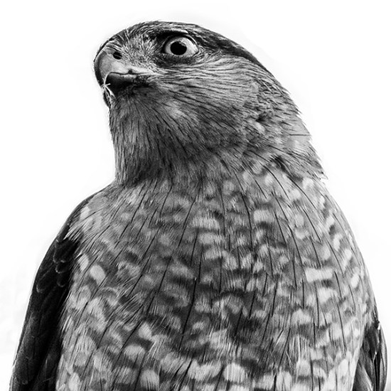 My Birding Muse