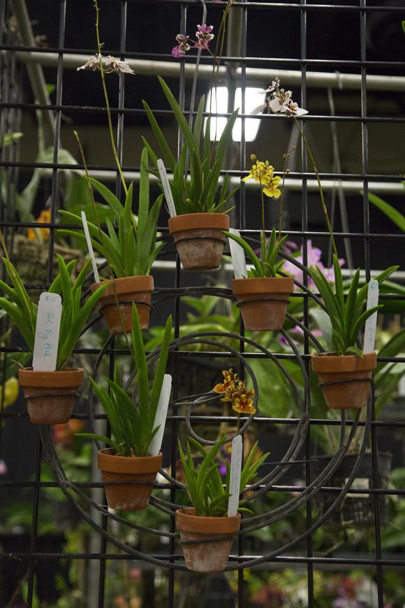 orchidshow-100_online