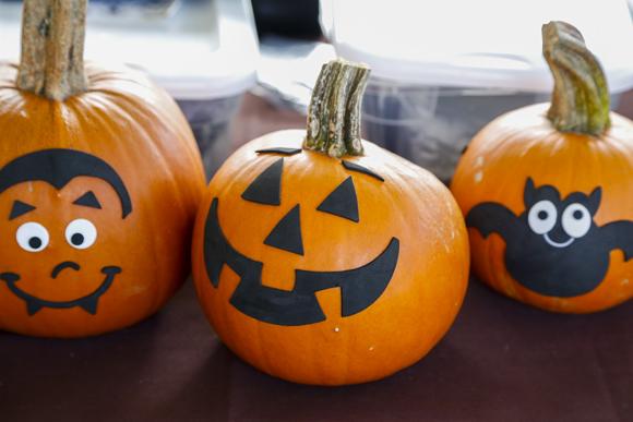 pumpkinpatch-38_online