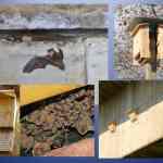 Murciélagos en Villaverde
