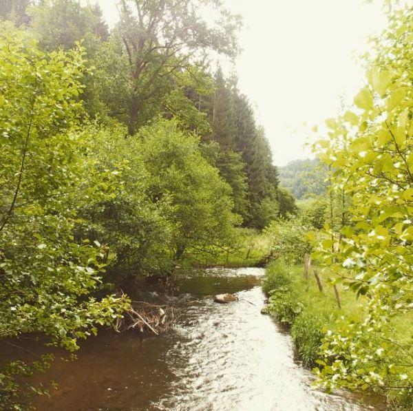 Ardennen _1