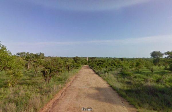 Uiteraard staat er een safari in het Krugerpark op het programma.