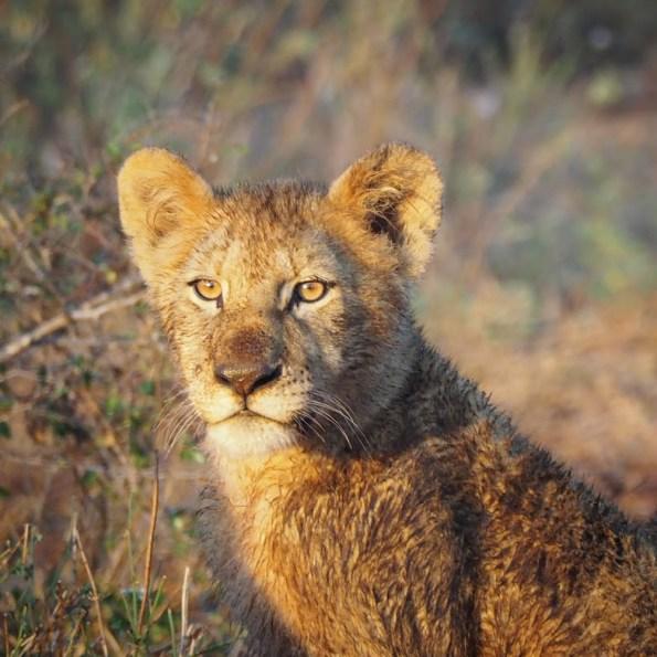2017 Krugerpark
