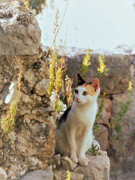Katten Dubrovnik