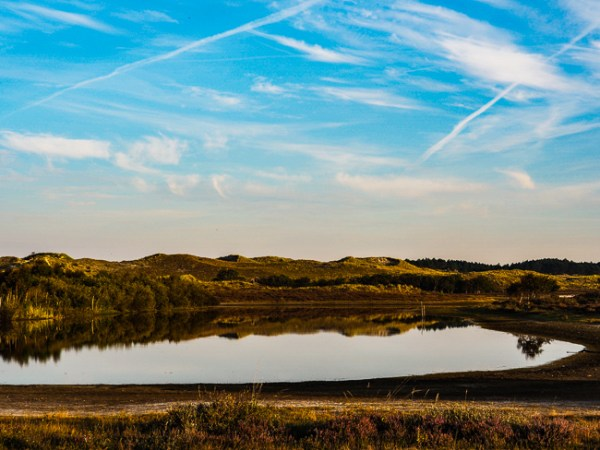 Vogelmeer heide Schoorlse Duinen