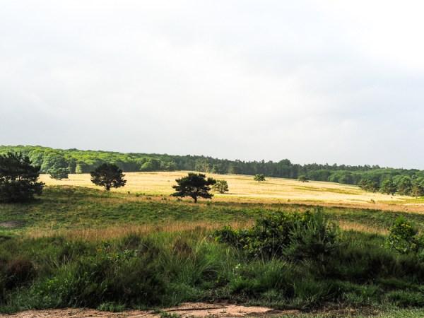 Hoog Soerense Heide