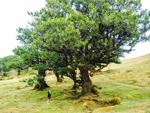 Poste Florestal Fanal