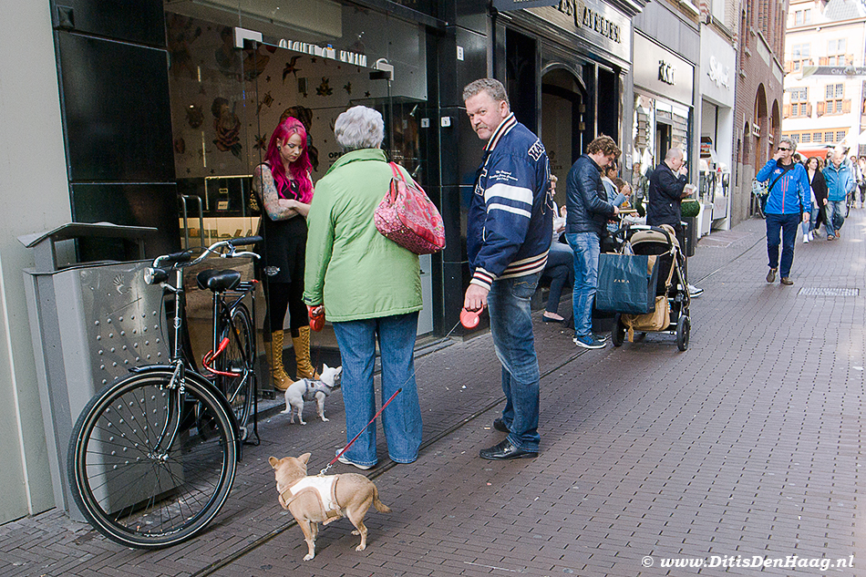 Dog on a Leash The Hague street photography