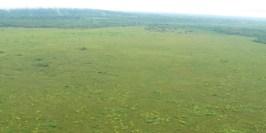 El Refugio de Vida Silvestre Sistemas de Humedales de Matusagaratí tiene como fin la protección y conservación de la biodiversidad . Foto: panamanglar.org/es/multimedios/