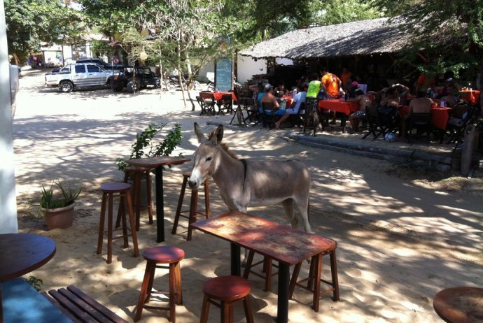 Donkey Dinner Guest in Jericoacoara