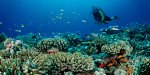 Coral reefs of red sea