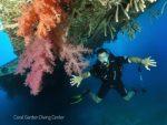 Hercules C130 coral