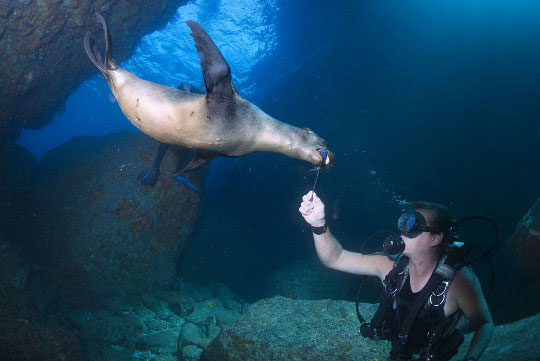 Diving With Sea Lions Dive The World Creature Features