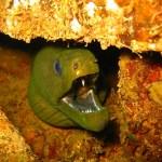 24-green-moray-lb-website