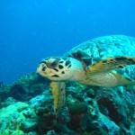 97-turtle-os-website