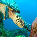 98-turtle-os-website