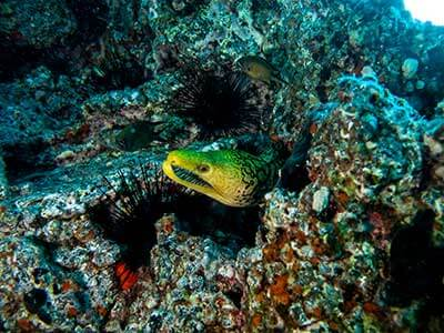 Moray Reef, plongée, Playa Blanca, Dive College Lanzarote