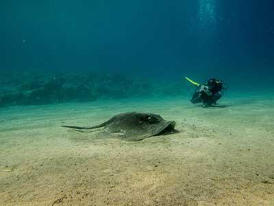 Ray Garden, tauchen, Dive College Lanzarote, Playa Blanca