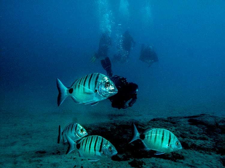 Cours PADI Staff Instructor, Dive College Lanzarote