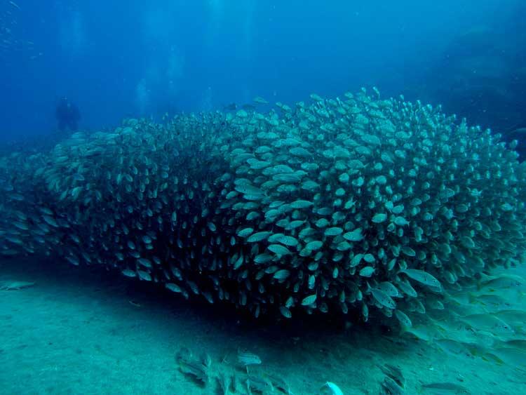 Plongée à Lanzarote, Dive College Lanzarote