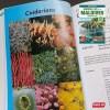 Marine Life Maldives - cnidarians