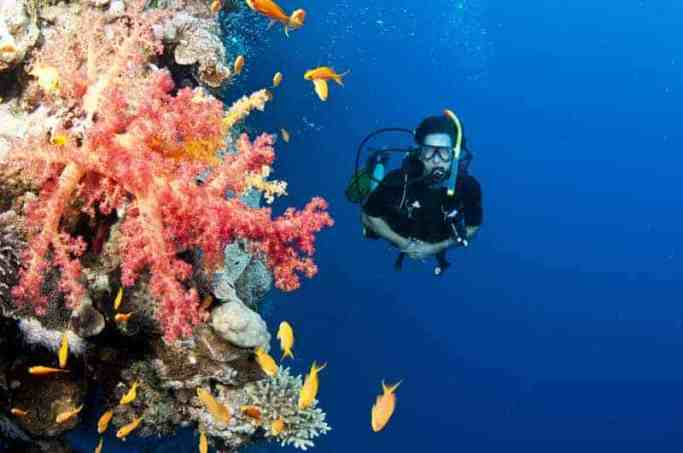 An environmentally friendly diver has  good  buoyancy