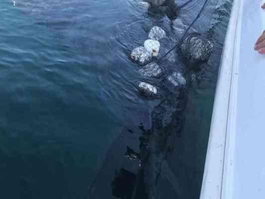חילוץ לוויתן בעומאן